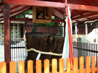 高浜神社御神木「鶴の松」