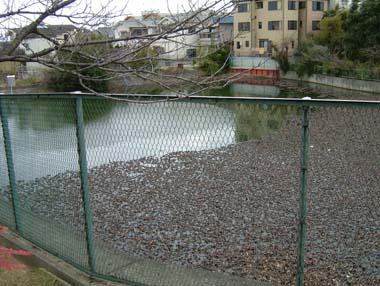 伯太陣屋跡のあそ池01