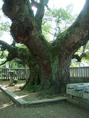 楠正行墓の楠
