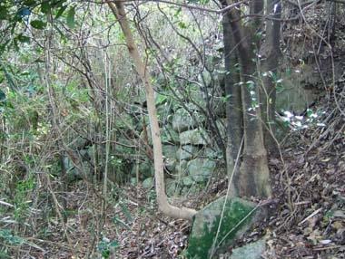 飯盛山城の残存石垣