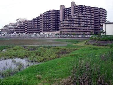 新堀城址の今池