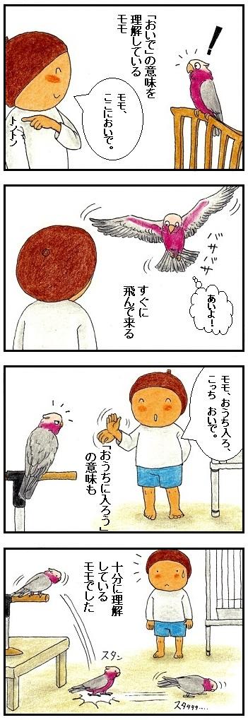 おうちに入ろうの意味を理解している鳥