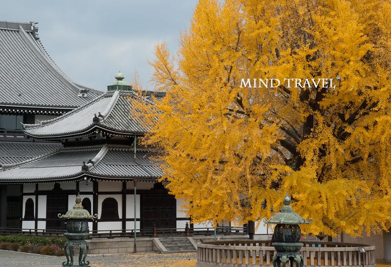 西本願寺 いちょう