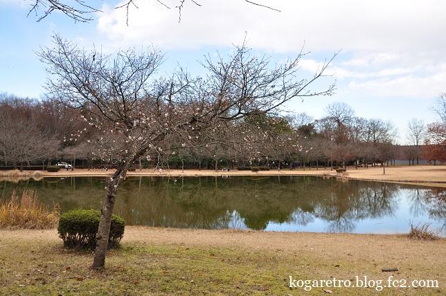 冬桜と紅梅2
