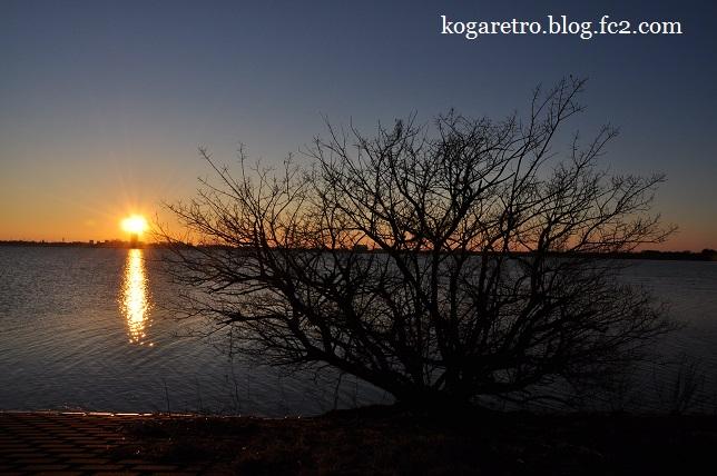 渡良瀬遊水地の初日の出5