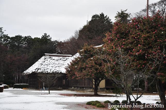 雪の古河総合公園3