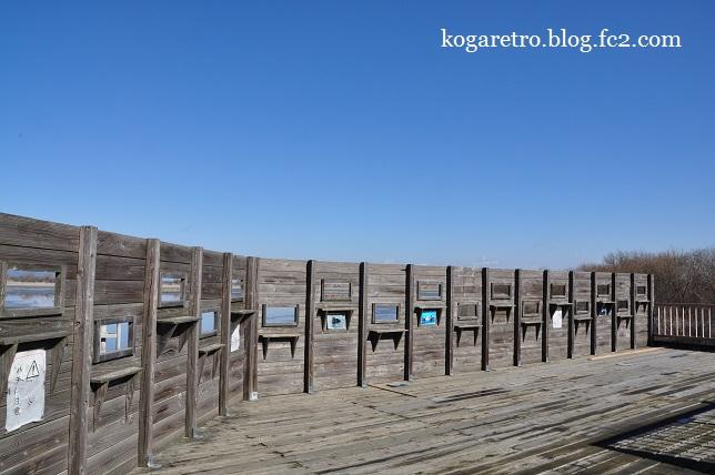 谷中湖の干し上げ(3)5