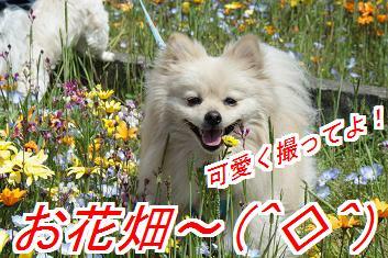 hanabani_20160125015910ab3.jpg