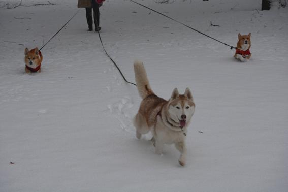 160118 雪02