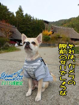 yuruiro_20151101_04_006