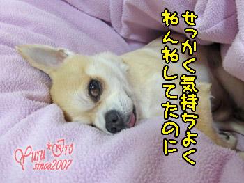 2016yuruiro_0215_k_004
