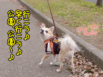 2016yuruiro_0125_k_003