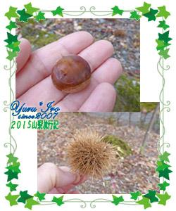 yuruiro20151030_wanpara_015