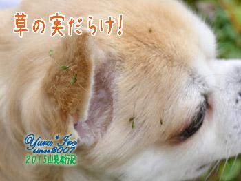 yuruiro20151030_01_k007