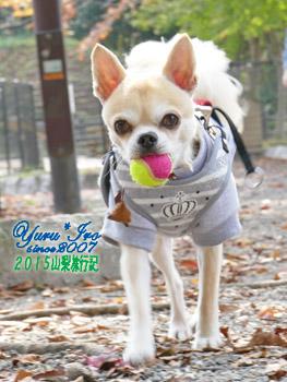yuruiro20151030_01_k008