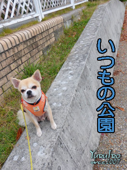 yuruiro20151031_k006