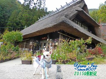 yuruiro_20151101_04_007