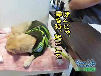 yuruiro20151102_k002