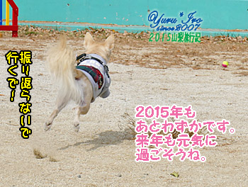 yuruiro20151102_k008