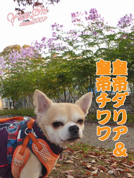 yuruiro20151117_k001