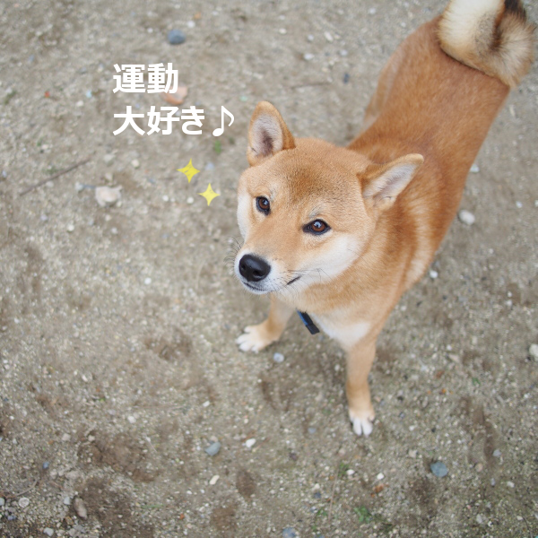 20151220-006.png
