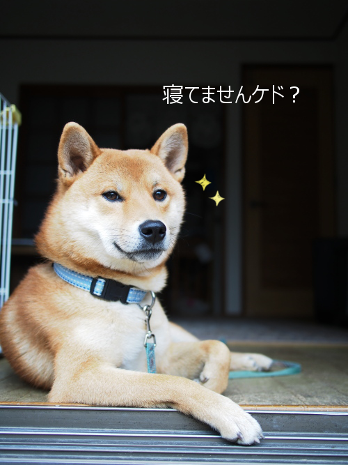 20151228-004.png