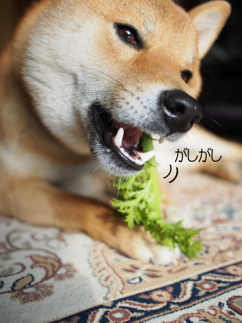20160122-006.png