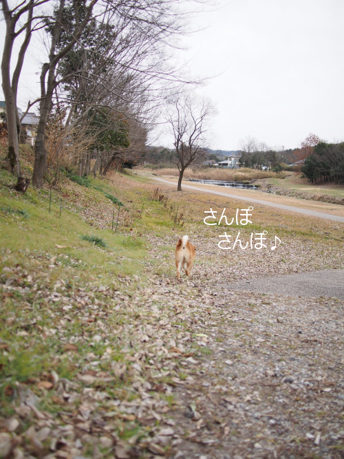 20160123-001.png