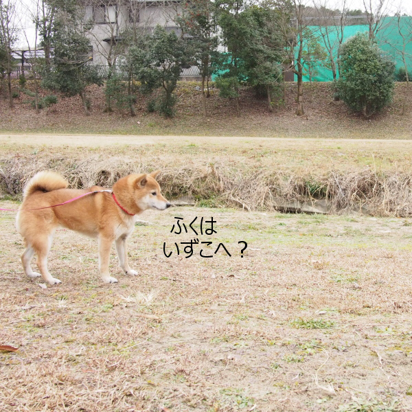 20160123-009.png
