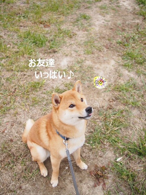 20160210-008.png