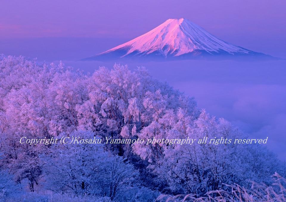 「紅富士荘厳」 (大蔵高丸より)