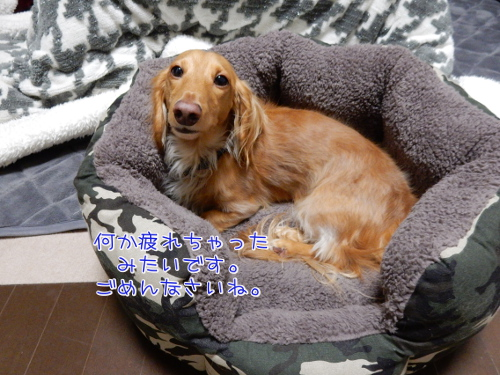 DSCN5978.jpg
