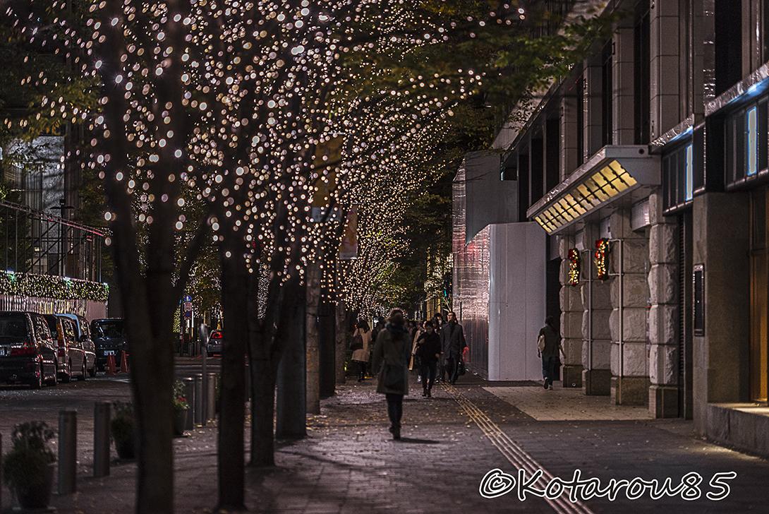 光の並木道 20151122