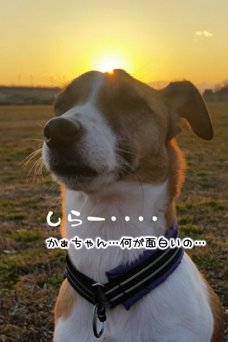 20160128_164742_02.jpg