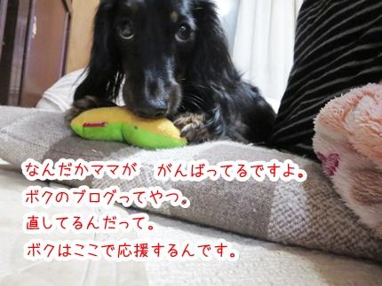 IMG_280108_1.jpg