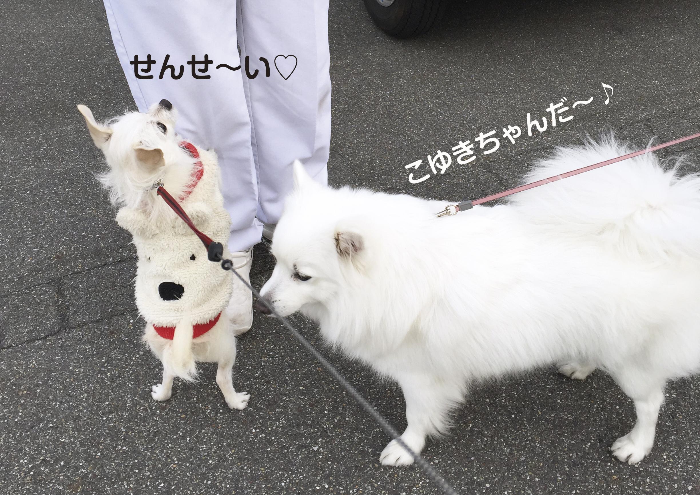 せんせ〜い2