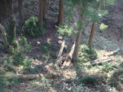 間伐した林