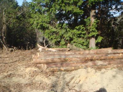 運び出した間伐材