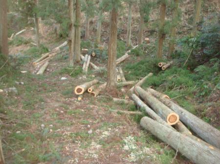 切り捨て放置の間伐材