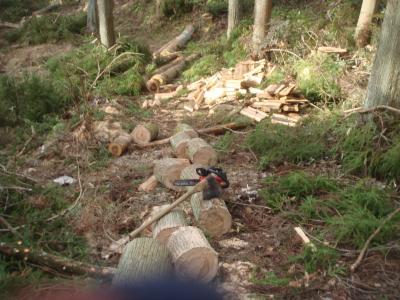 間伐材の薪割り