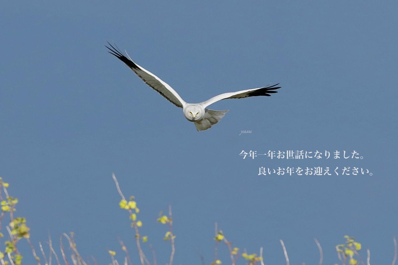 ハイチュウ♂年末挨拶用横yネ995A9690 -4