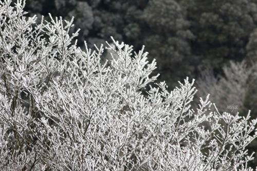 樹雪mネ995A8592 -3
