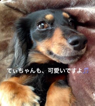 fc2blog_20151221085737b96.jpg
