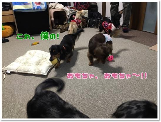 2016131 皇子山公園_7878