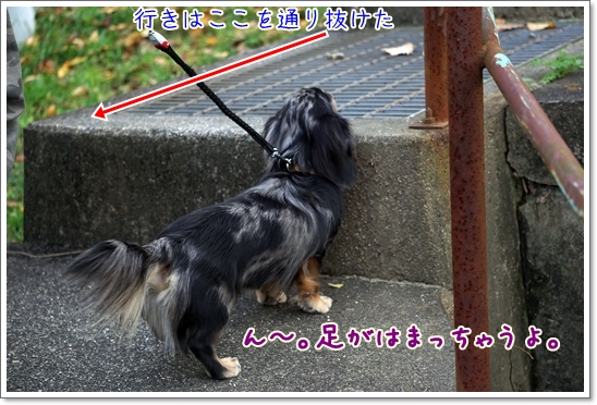 DSC04362.jpg