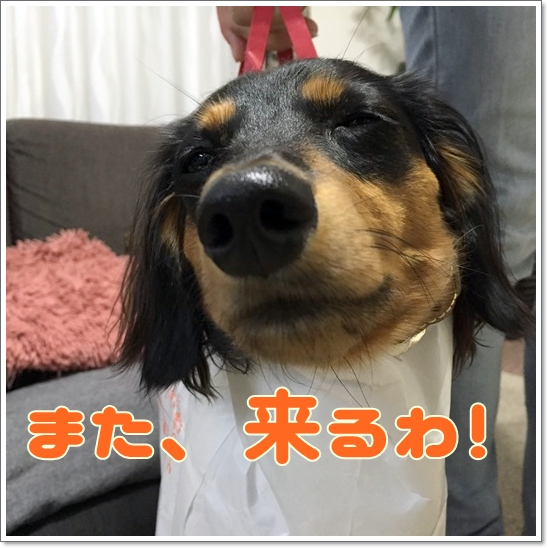 IMG_7788_20151024205232b98.jpg