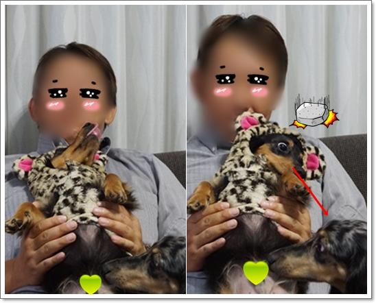 cats201510232.jpg