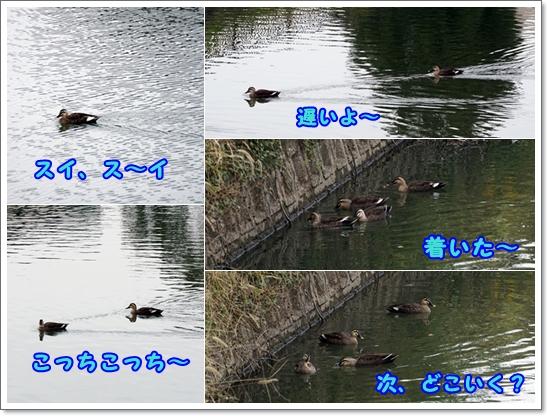 cats201511223.jpg