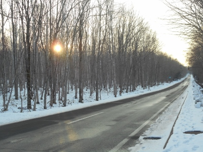 雪がほとんどない正月