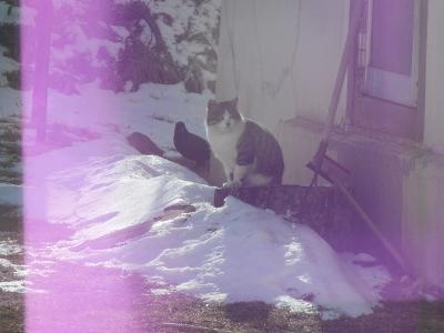 猫×カラス